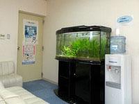 熱帯魚が泳ぐ大きな水槽